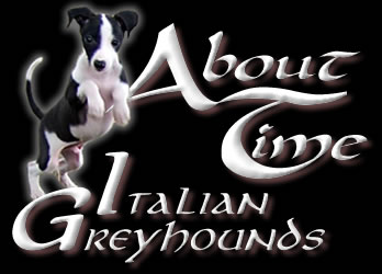Italian Greyhound Breeder with Puppies Available